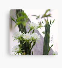 Princess of the Night - Blooming in Abundance Canvas Print