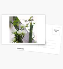 Princess of the Night - Blooming in Abundance Postcards