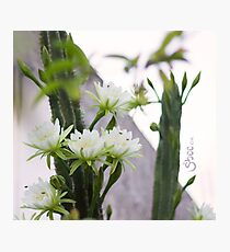 Princess of the Night - Blooming in Abundance Photographic Print