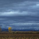 End of Fall by Jill Doyle