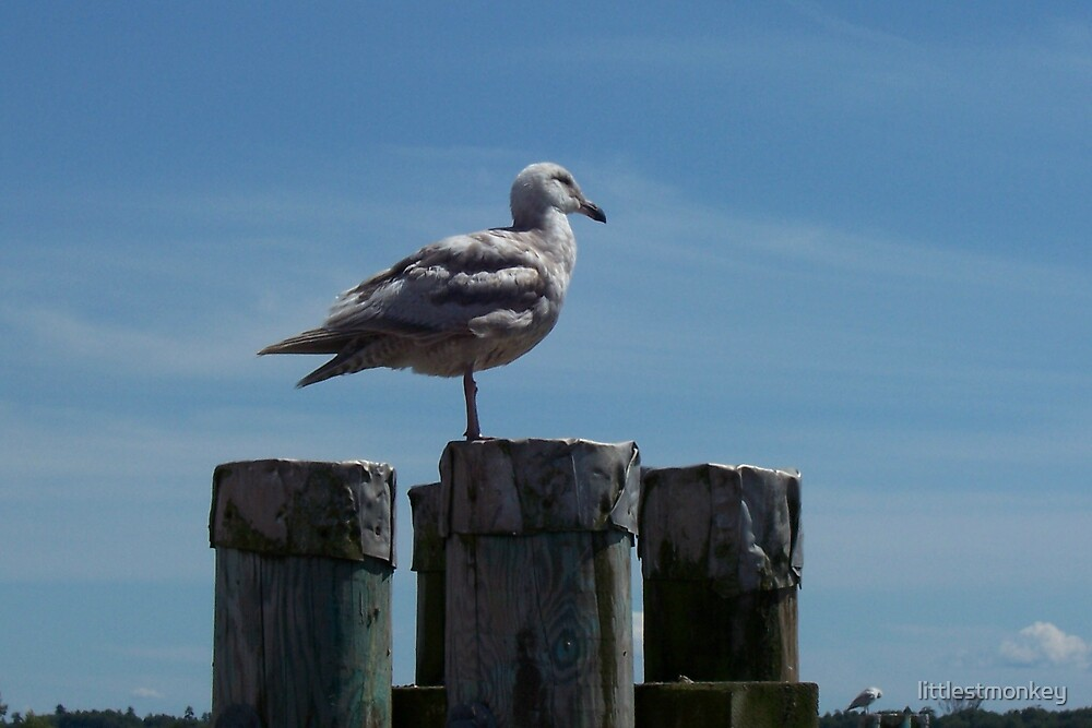 Quest for The Perfect Seagull by littlestmonkey