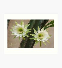 Princess of the Night - Twin Blooms with Bees Art Print