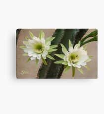 Princess of the Night - Twin Blooms with Bees Canvas Print