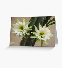 Princess of the Night - Twin Blooms with Bees Greeting Card