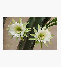 Princess of the Night - Twin Blooms with Bees Photographic Print