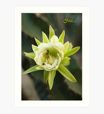 Princess of the Night - Bloom with Playful Bees Art Print