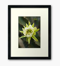Princess of the Night - Bloom with Playful Bees Framed Print