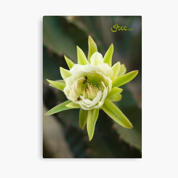 Princess of the Night - Bloom with Playful Bees Canvas Print