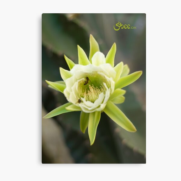 Princess of the Night - Bloom with Playful Bees Metal Print