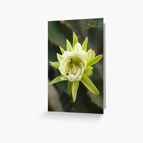 Princess of the Night - Bloom with Playful Bees Greeting Card