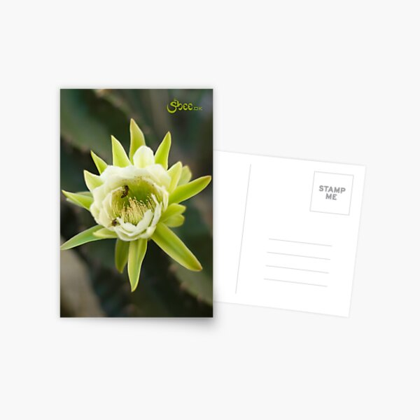 Princess of the Night - Bloom with Playful Bees Postcard