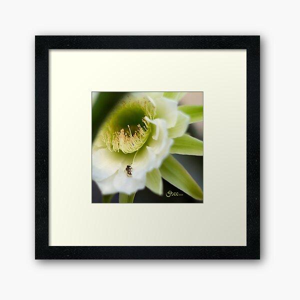 Princess of the Night - Bloom Close Up  Framed Art Print