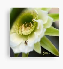 Princess of the Night - Bloom Close Up  Canvas Print