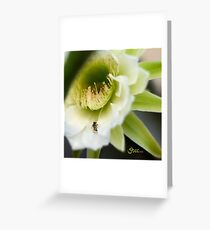 Princess of the Night - Bloom Close Up  Greeting Card