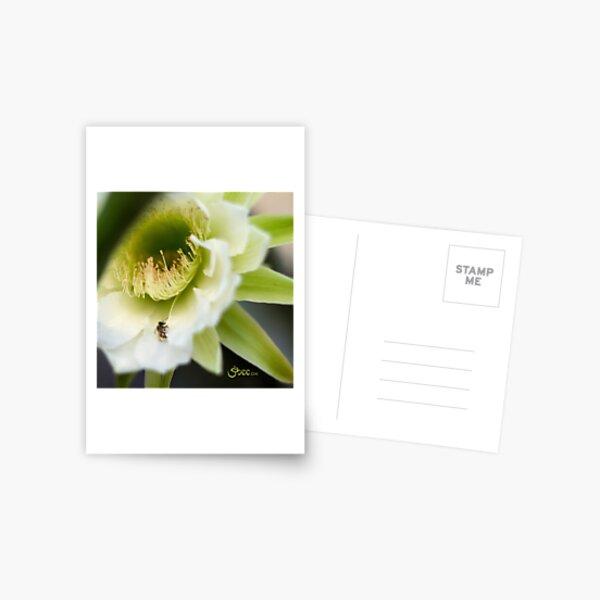 Princess of the Night - Bloom Close Up  Postcard