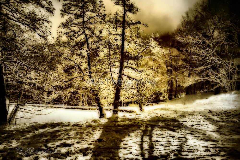 Winter Wonder by WJPhotography