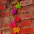 Colorful Wall by jerry  alcantara