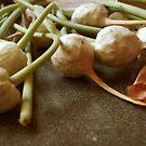 Garlic Flowers Pre-Bloom by Maureen Kay