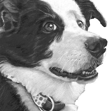 Border Collie Love ~ Face by Janeoooo