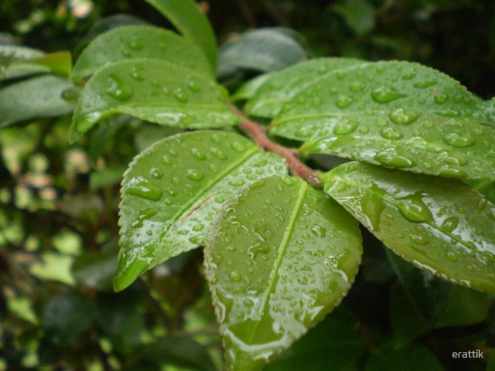 green leaf by erattik