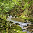 Valserine river under the green woods of Haut Jura Natural Park by Patrick Morand