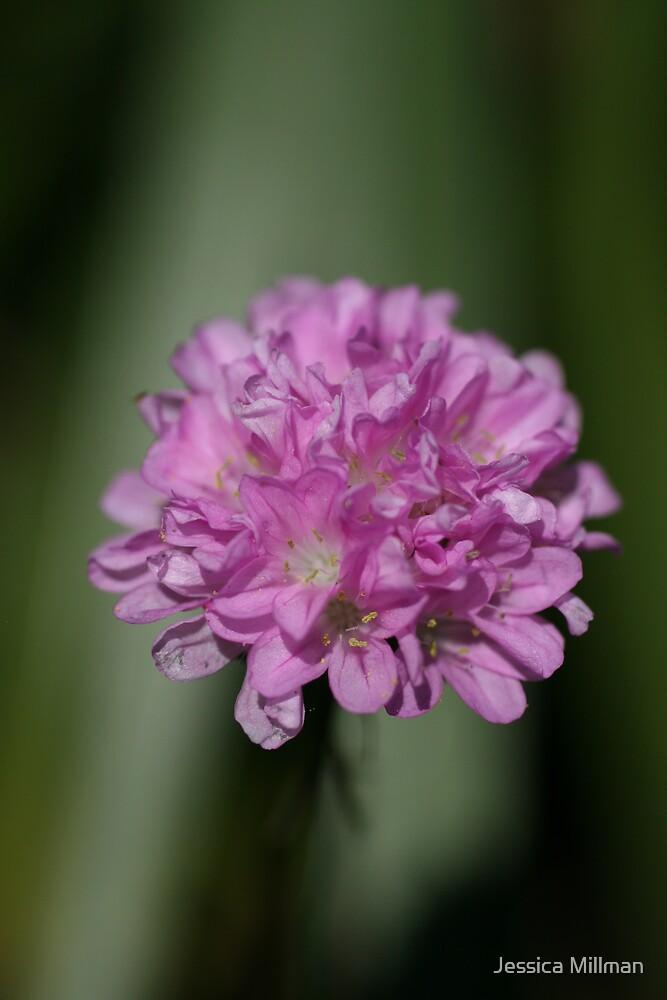 Tiny purple flowers by Jessica Millman