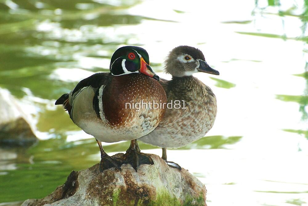 Wood Duck Pair by nightbird81