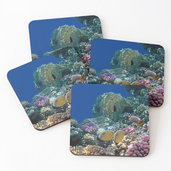 The Beautiful Exquisite Butterflyfish in the Red Sea Coasters (Set of 4)