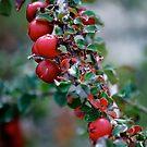 Red Berries by Pamela Hubbard