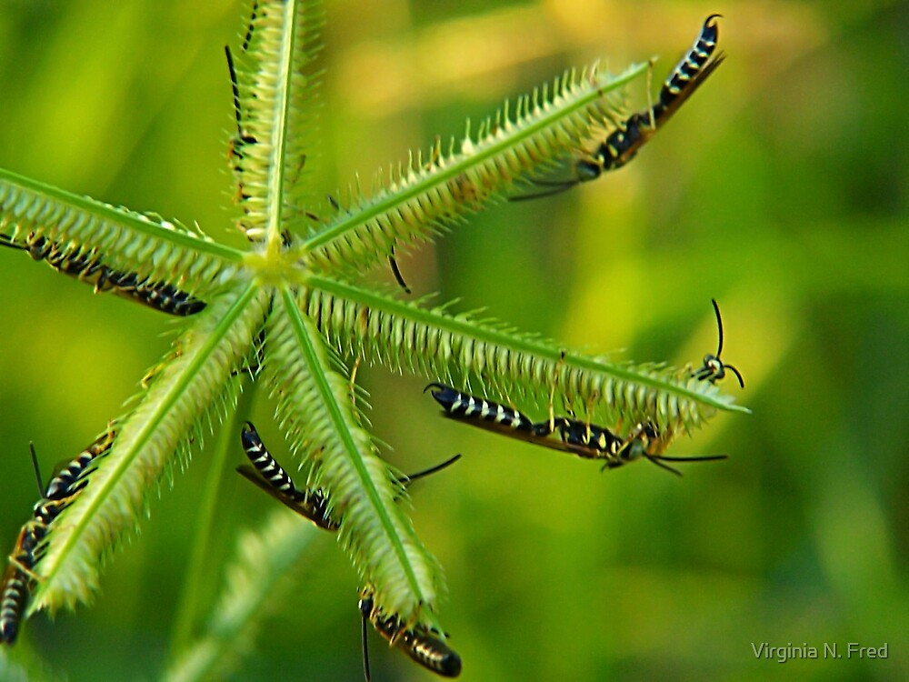 Paper Wasps by Virginia N. Fred