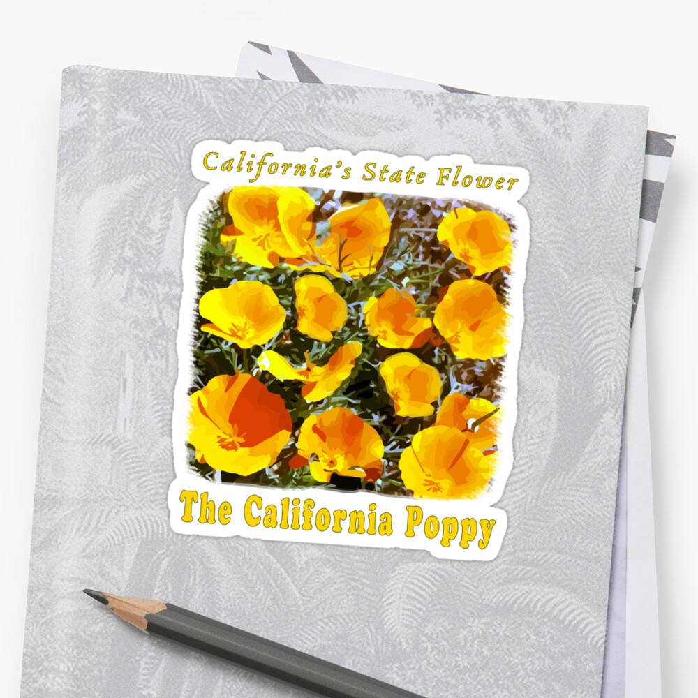 Golden Poppy State Flower Of California California Poppies