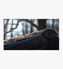 Roof tile Photographic Print