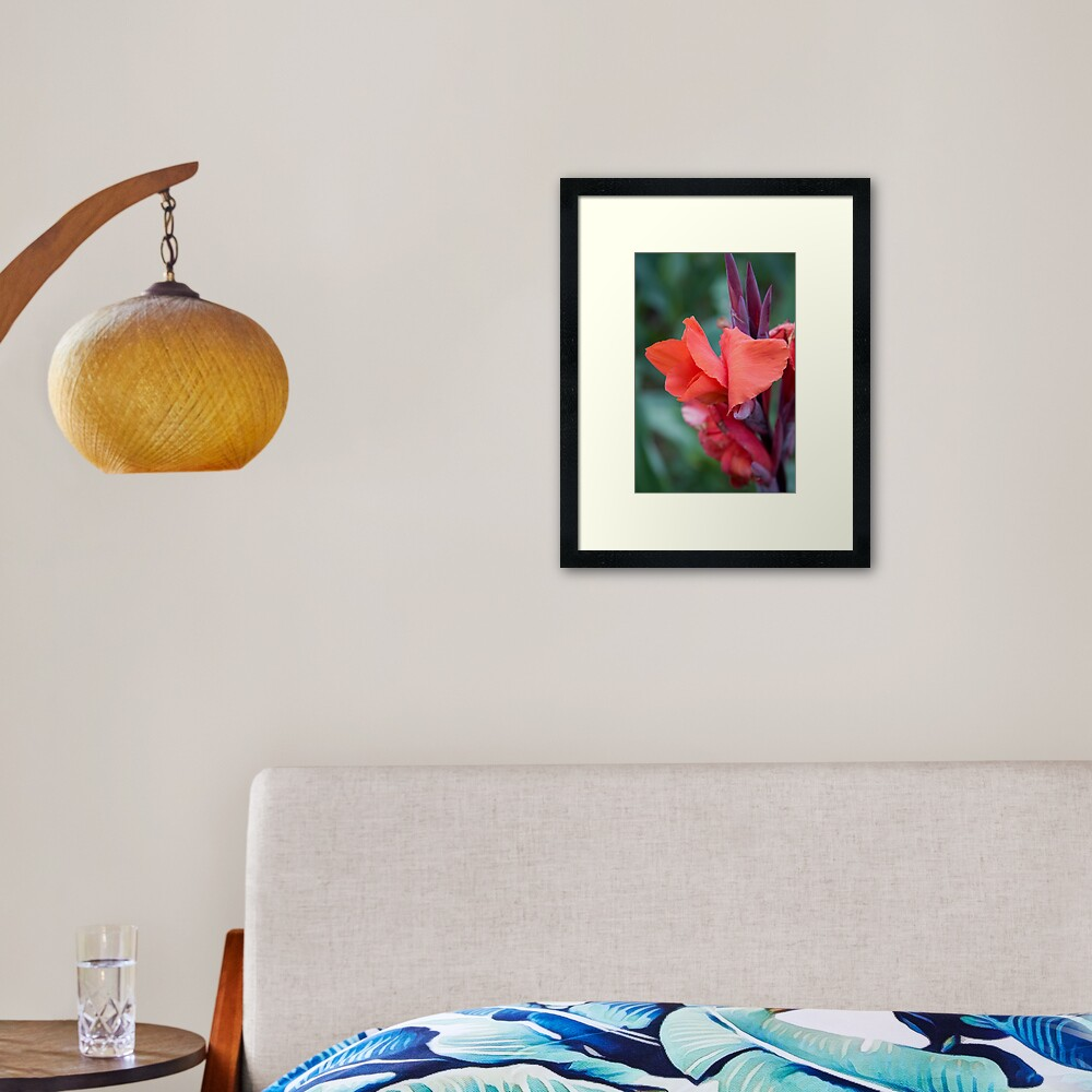 Orange Canna Lily Framed Art Print