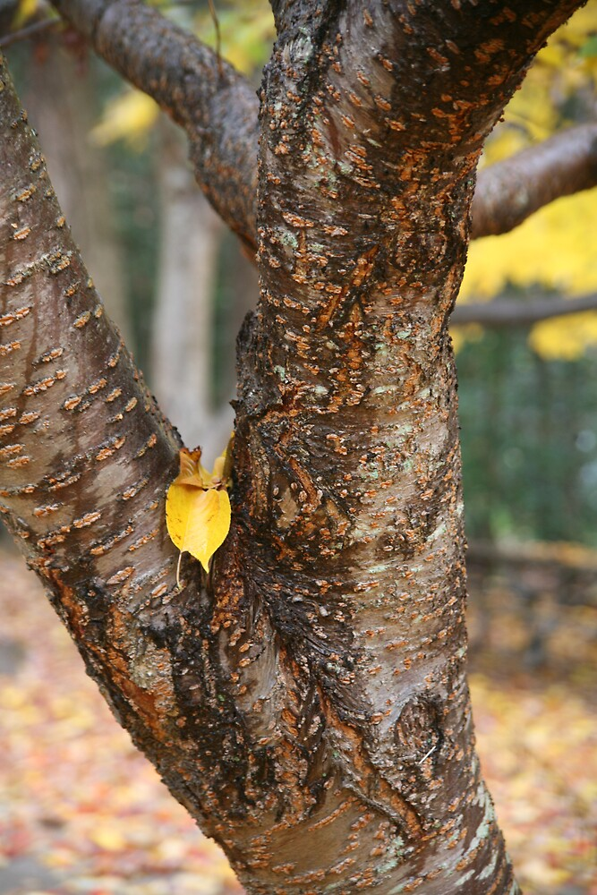 Yellow by katw0man