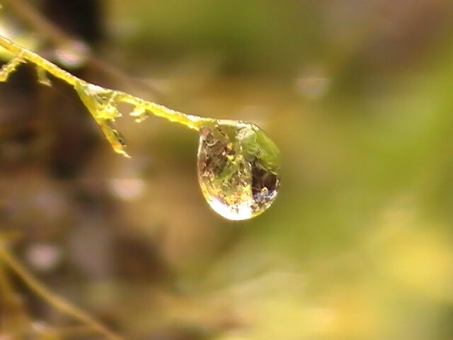 Moss Drop by Stephanie Ogg