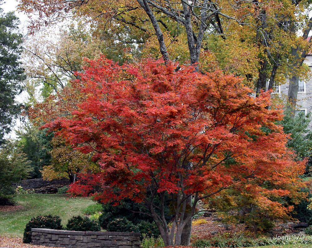 Cheekwood In Fall by Joan1970