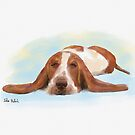 Cute Brown and White Basset Hound Sleeping on the Floor by ibadishi