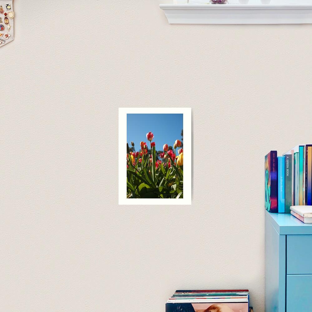 Tulips at Araluen Art Print