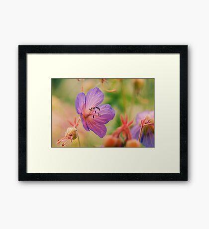 Violet  Fleurs  Framed Print