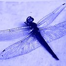 Dragonfly Frozen in Blue by Travelwithmyart