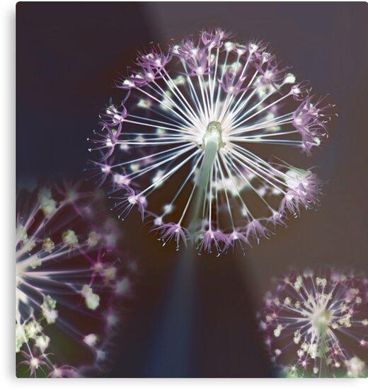 Floral Fireworks. Dark Floral by tanjica