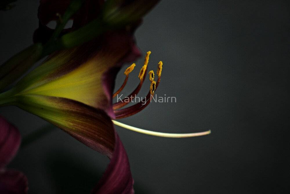 Stamen by Kathy Nairn