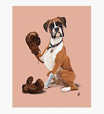 The Boxer (colour) Photographic Print