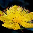 Ant Plant by Kimberly Johnson