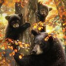 Black Bears by David Penfound