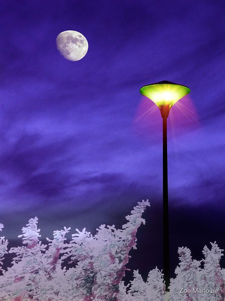 Night Companion by Zoe Marlowe