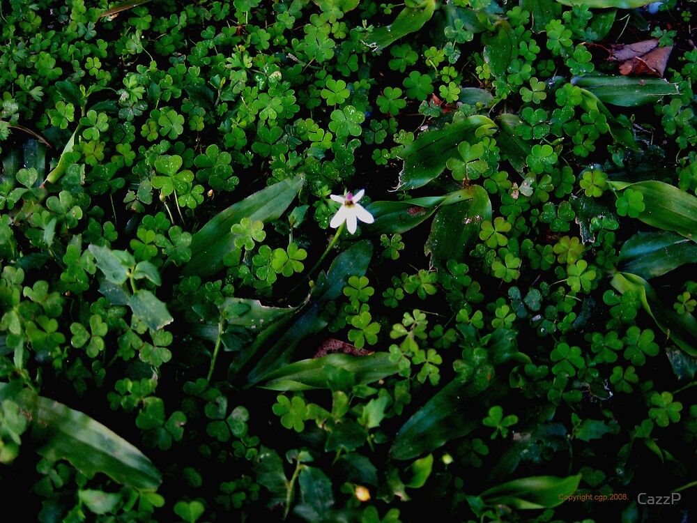Tiny flower in the lawn.  by CazzP