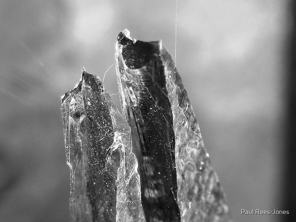 Shards. by Paul Rees-Jones