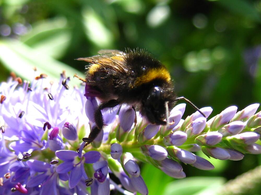 Bee Happy by luisa0176