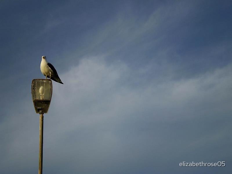 Albatros by elizabethrose05